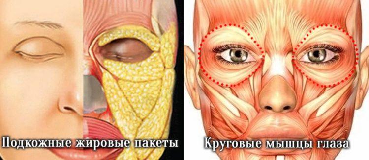 Причины темных кругов под глазами отзывы врачей косметологов